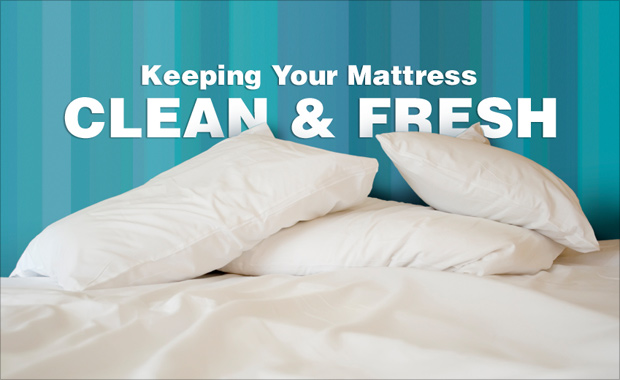Mattress Cleaning Service Chesterfield | Mattress Cleaning Service Sheffield | Mattress Cleaning Service Rotherham | Mattress Cleaning Service Barnsley | Mattress Cleaning Service Doncaster - Mattress Cleaning Service Worksop | Mattress Cleaning Service Retford | Mattress Cleaning Service Mansfield